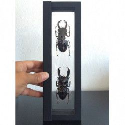 Cadre noir Nimbus 265 pour objets de collections.